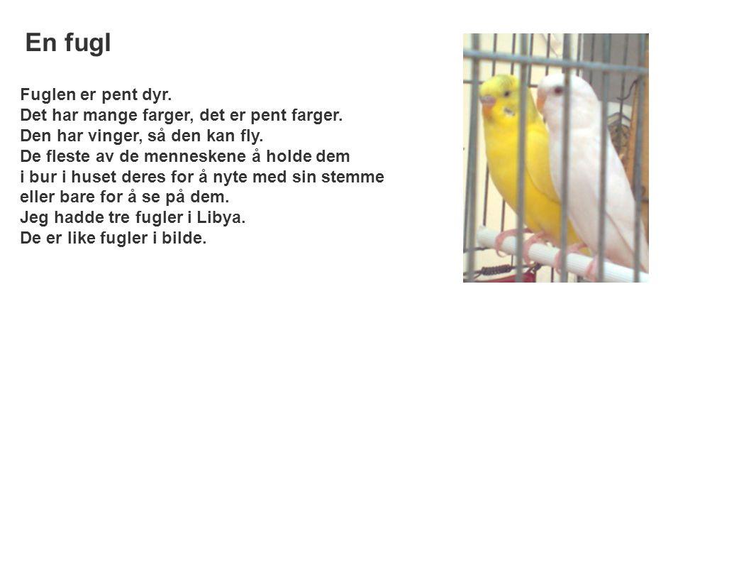 Fuglen er pent dyr. Det har mange farger, det er pent farger. Den har vinger, så den kan fly. De fleste av de menneskene å holde dem i bur i huset der