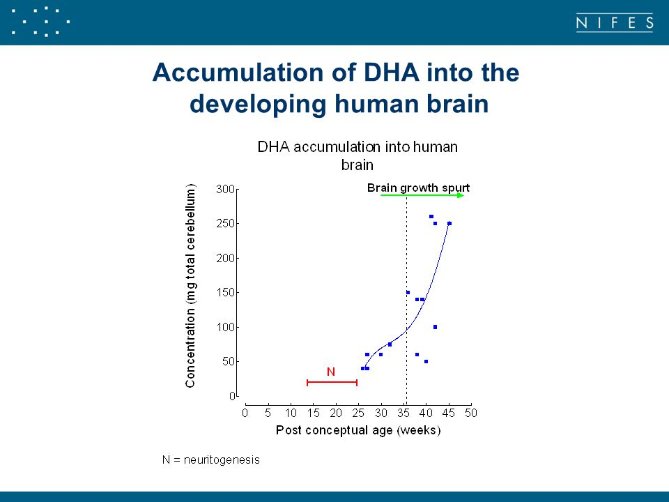 Accumulation of DHA into the developing human brain