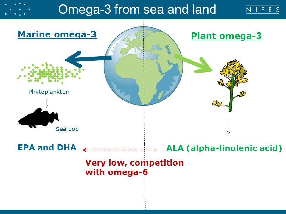 Marine omega-3 Phytoplankton Seafood Plant omega-3 EPA and DHA ALA (alpha-linolenic acid) Omega-3 from sea and land Very low, competition with omega-6