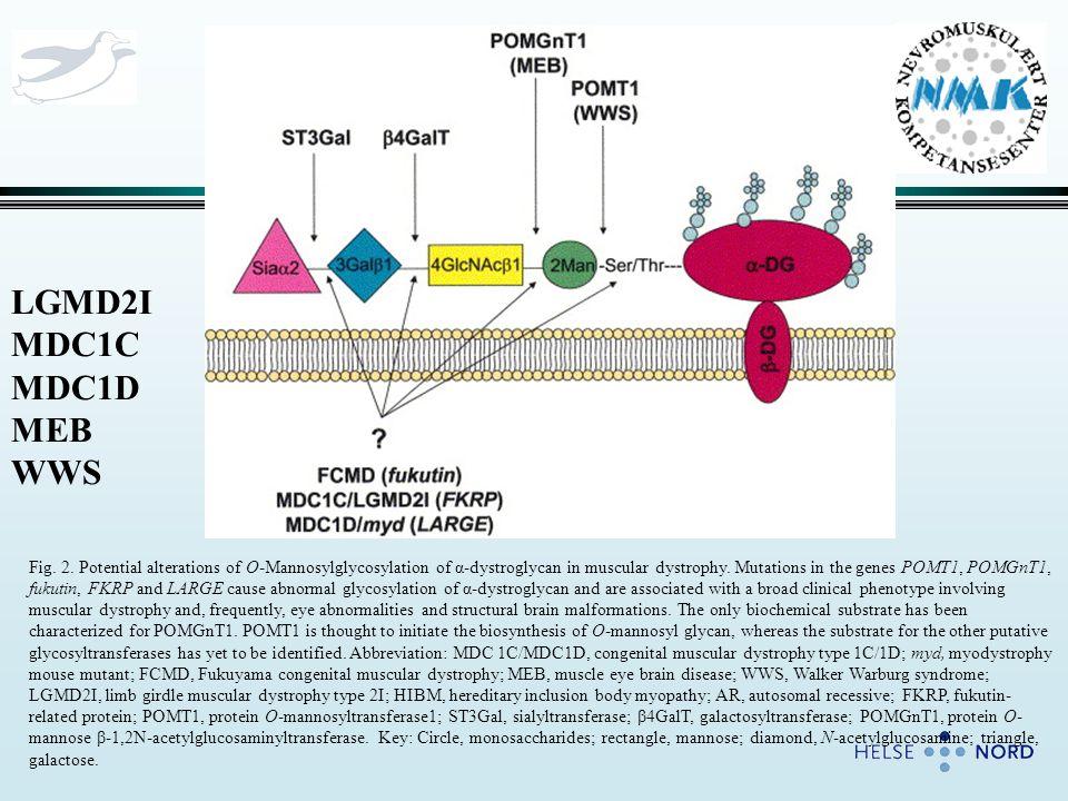Problemstillinger: 1.FKRP biologiske rolle – aktivitet, target, substrat.