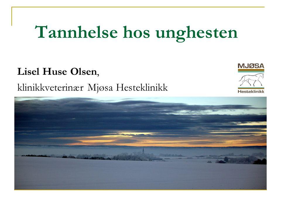 Tannhelse hos unghesten Lisel Huse Olsen, klinikkveterinær Mjøsa Hesteklinikk
