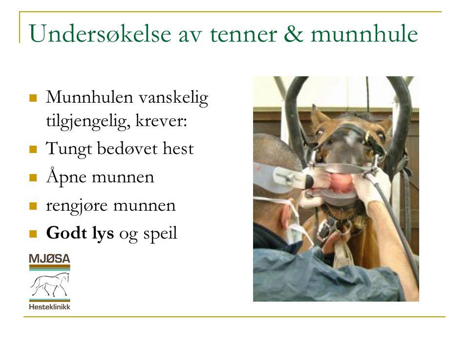 Undersøkelse av tenner & munnhule  Munnhulen vanskelig tilgjengelig, krever:  Tungt bedøvet hest  Åpne munnen  rengjøre munnen  Godt lys og speil