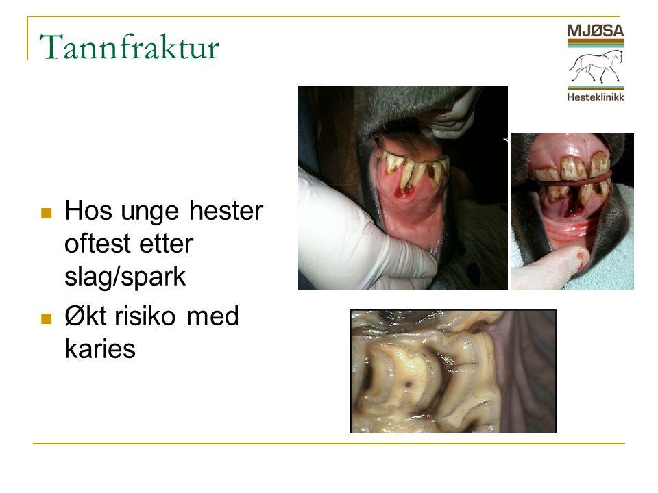 Tannfraktur  Hos unge hester oftest etter slag/spark  Økt risiko med karies