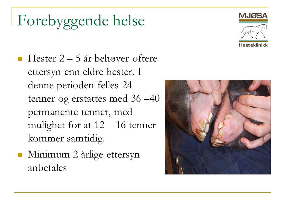 Forebyggende helse  Hester 2 – 5 år behøver oftere ettersyn enn eldre hester.