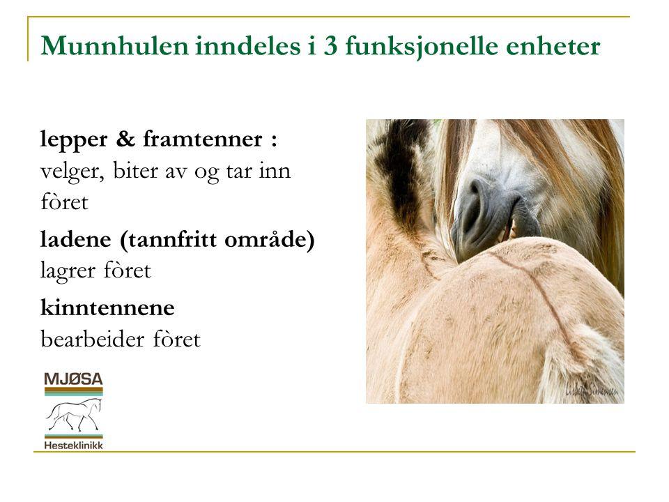 Forebyggende helse  Hestens alder påvirker behovet for hvor ofte og hvor grundig munnhule & tenner skal ettersees.