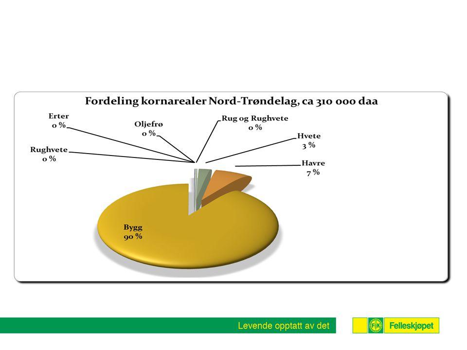 Kornproduksjon i Tr.lag tilpasset industriens behov .
