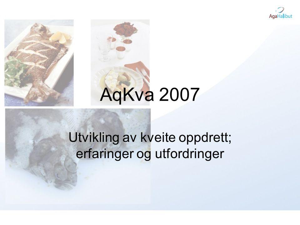 AqKva 2007 Utvikling av kveite oppdrett; erfaringer og utfordringer