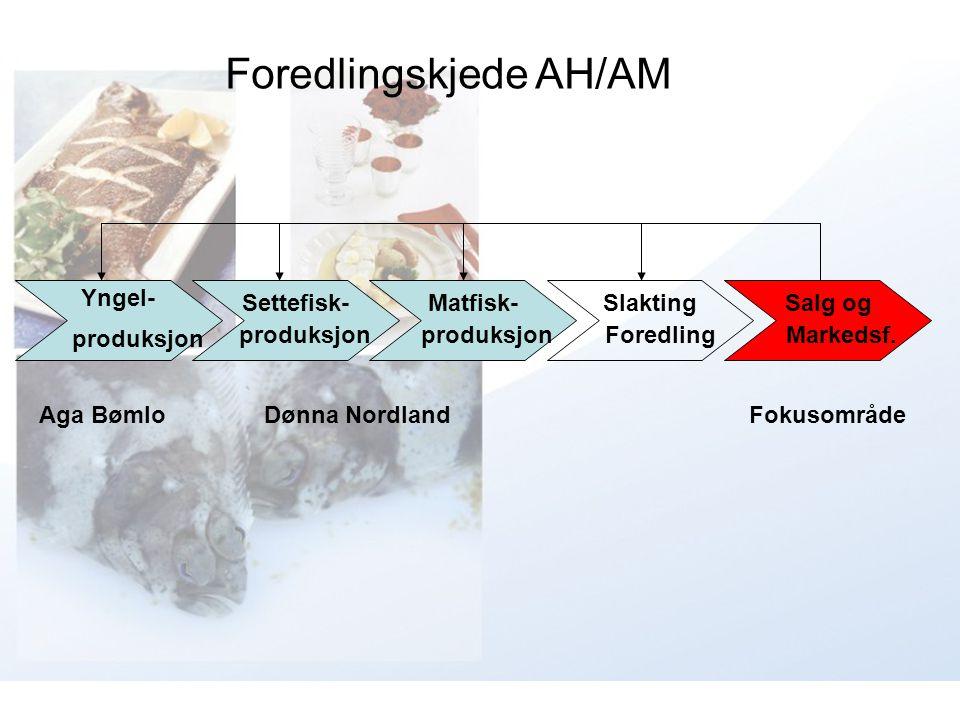 Yngel- produksjon Settefisk- produksjon Matfisk- produksjon Slakting Foredling Salg og Markedsf. Aga BømloDønna NordlandFokusområde Foredlingskjede AH