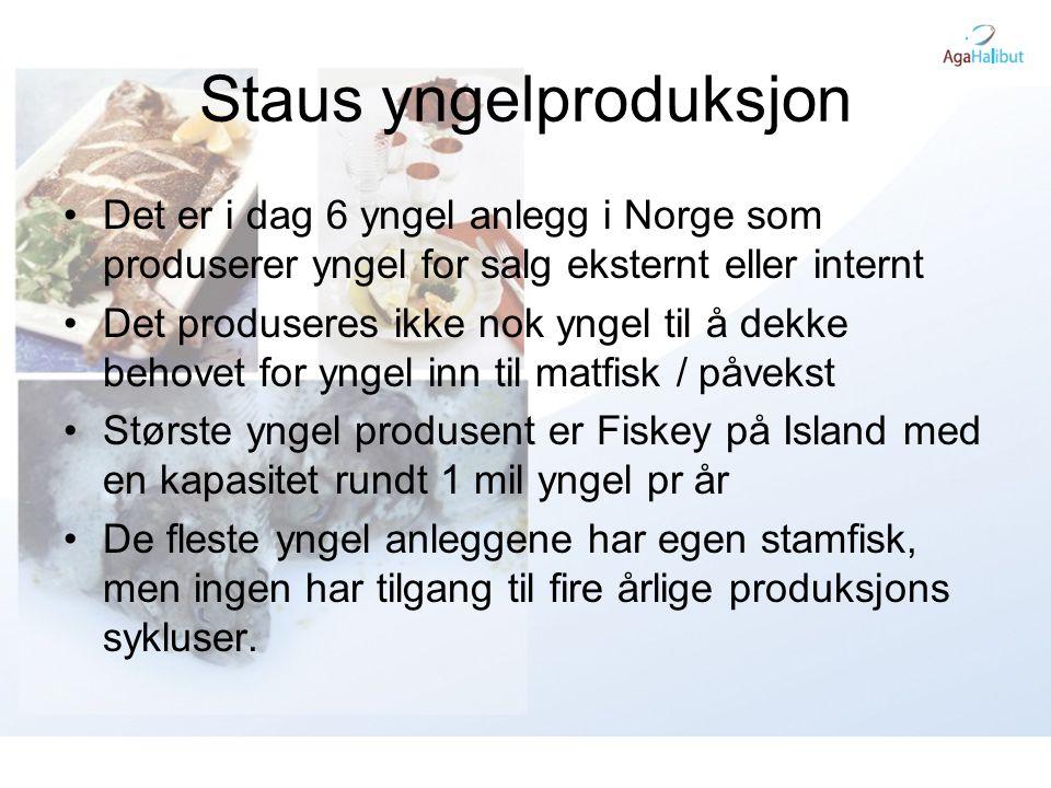 Staus yngelproduksjon •Det er i dag 6 yngel anlegg i Norge som produserer yngel for salg eksternt eller internt •Det produseres ikke nok yngel til å d