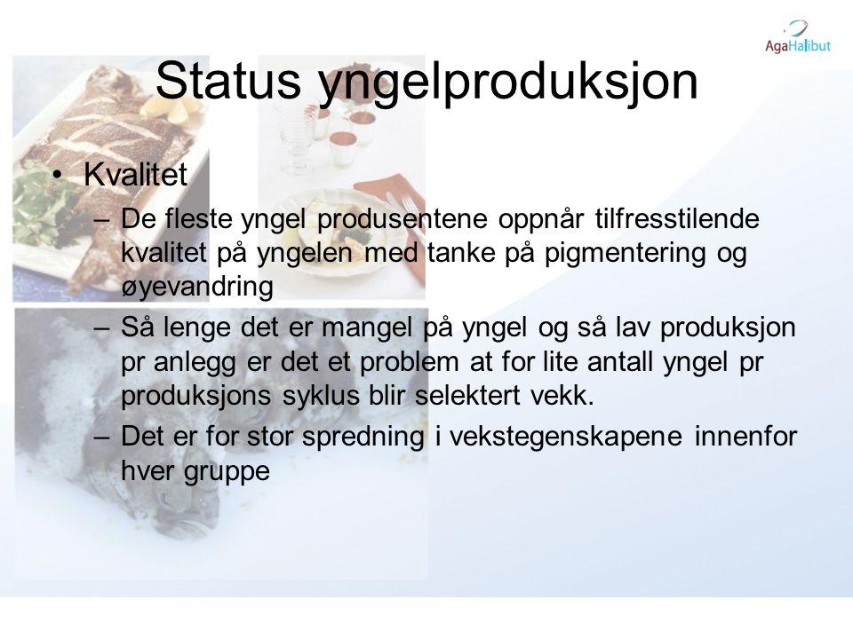 Status yngelproduksjon •Kvalitet –De fleste yngel produsentene oppnår tilfresstilende kvalitet på yngelen med tanke på pigmentering og øyevandring –Så