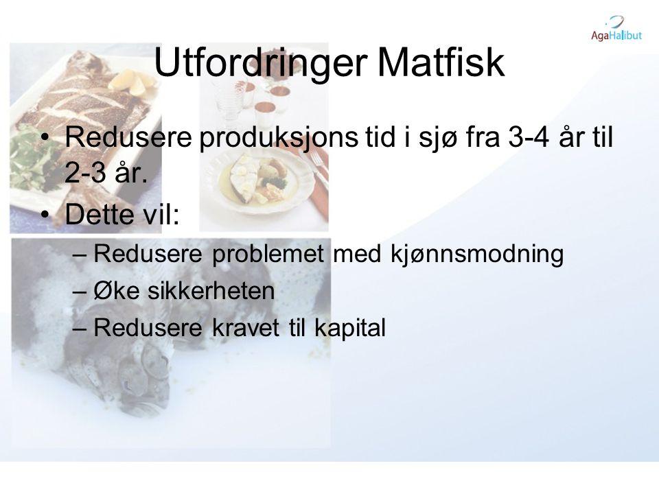 Utfordringer Matfisk •Redusere produksjons tid i sjø fra 3-4 år til 2-3 år. •Dette vil: –Redusere problemet med kjønnsmodning –Øke sikkerheten –Reduse
