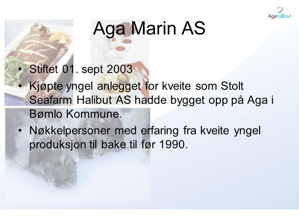 Aga Marin AS •Stiftet 01. sept 2003 •Kjøpte yngel anlegget for kveite som Stolt Seafarm Halibut AS hadde bygget opp på Aga i Bømlo Kommune. •Nøkkelper