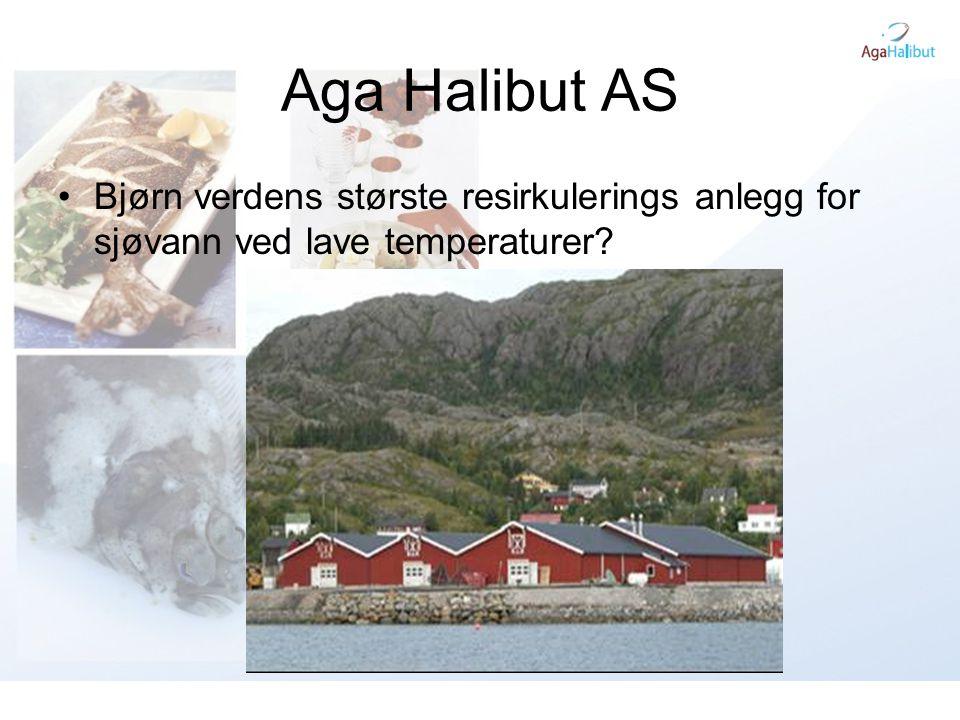 Aga Halibut AS •Bjørn –3 Haller –40stk 6 meter kar –16stk 4 meter kar –Kan løfte 400 tusen kveite fra 5 til 500 gram pr år