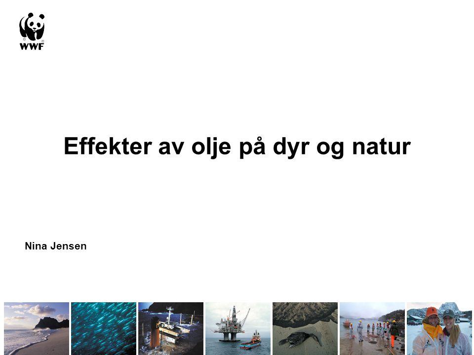 Effekter av olje på dyr og natur Nina Jensen
