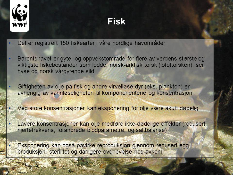 Fisk •Det er registrert 150 fiskearter i våre nordlige havområder •Barentshavet er gyte- og oppvekstområde for flere av verdens største og viktigste f