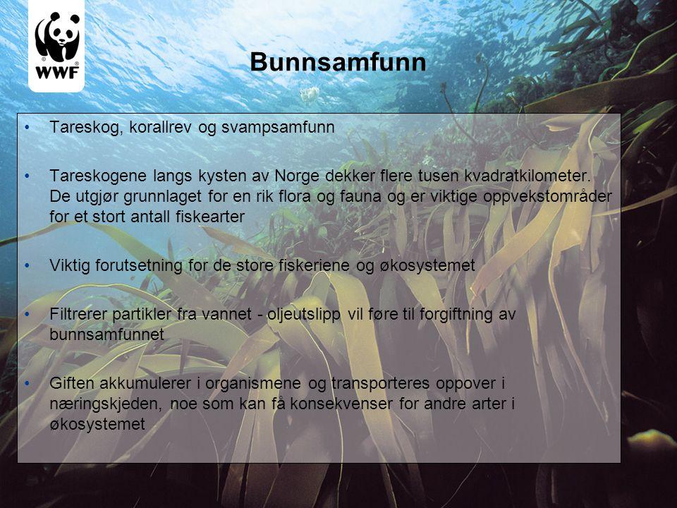 Bunnsamfunn •Tareskog, korallrev og svampsamfunn •Tareskogene langs kysten av Norge dekker flere tusen kvadratkilometer. De utgjør grunnlaget for en r