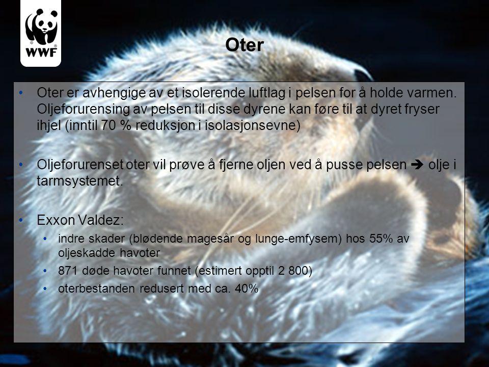 Oter •Oter er avhengige av et isolerende luftlag i pelsen for å holde varmen. Oljeforurensing av pelsen til disse dyrene kan føre til at dyret fryser