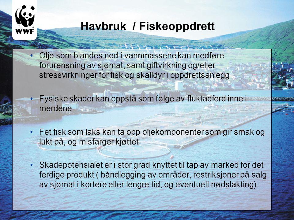 Havbruk / Fiskeoppdrett •Olje som blandes ned i vannmassene kan medføre forurensning av sjømat, samt giftvirkning og/eller stressvirkninger for fisk o