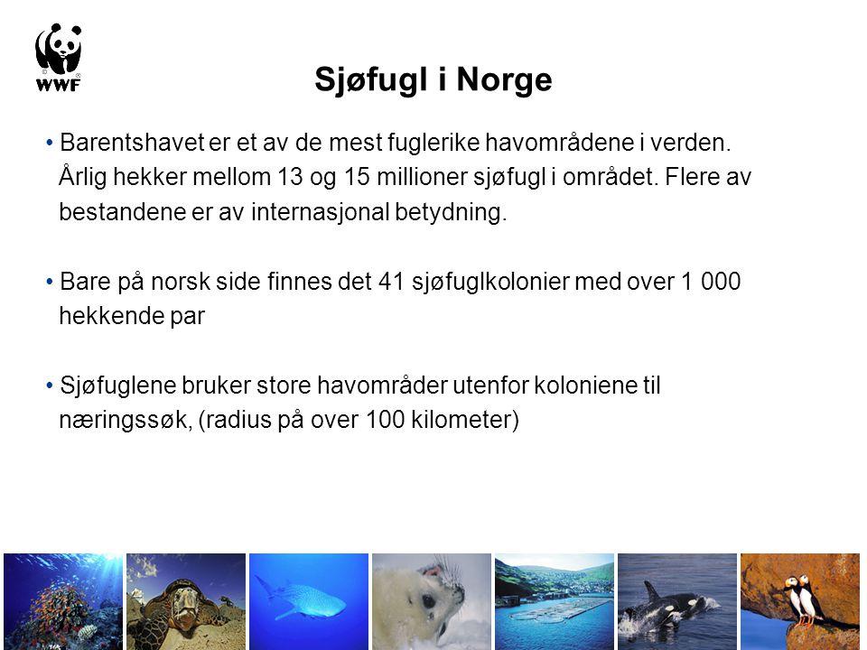 Sjøfugl i Norge • Barentshavet er et av de mest fuglerike havområdene i verden. Årlig hekker mellom 13 og 15 millioner sjøfugl i området. Flere av bes