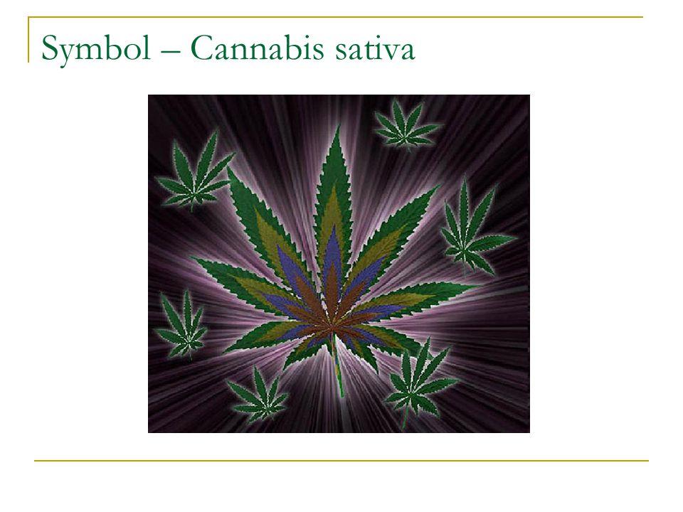 Cannabiskulturens viktigste ritual Intervjuer: Er det viktig når du røyker at det er andre rundt deg.