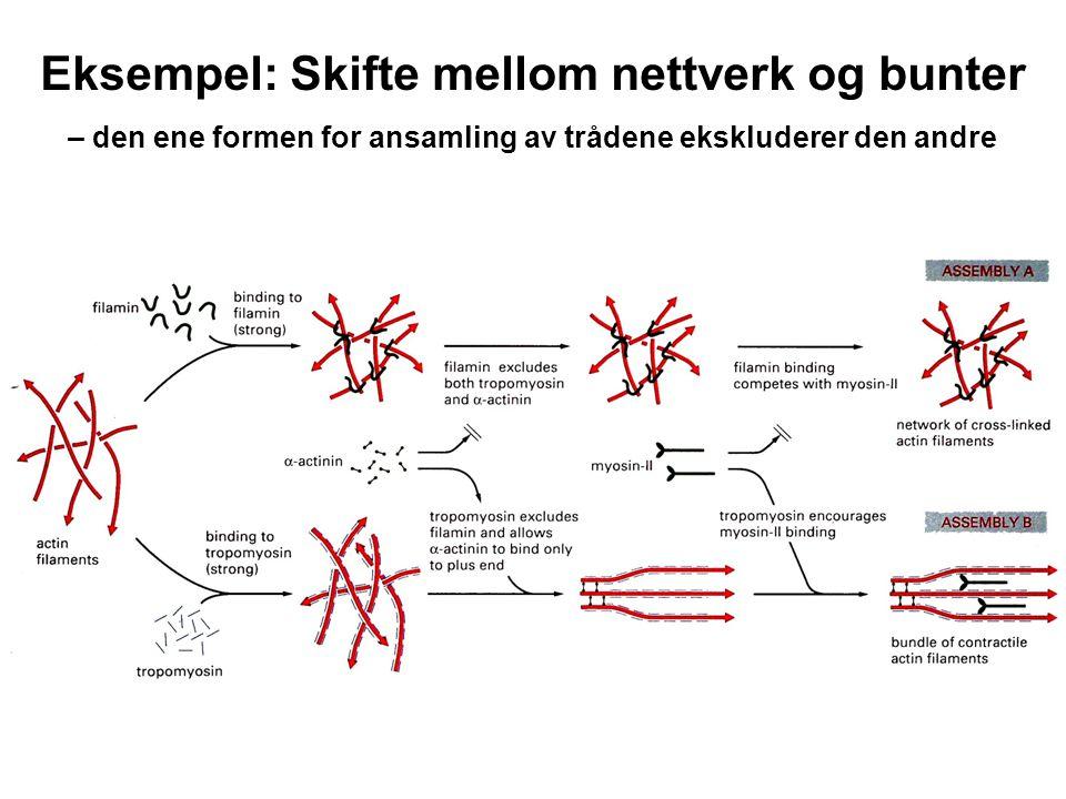 Eksempel: Skifte mellom nettverk og bunter – den ene formen for ansamling av trådene ekskluderer den andre