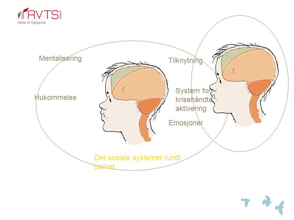 Tilknytning System for krisehåndtering, aktivering Emosjoner Hukommelse Mentalisering Det sosiale systemet rundt barnet