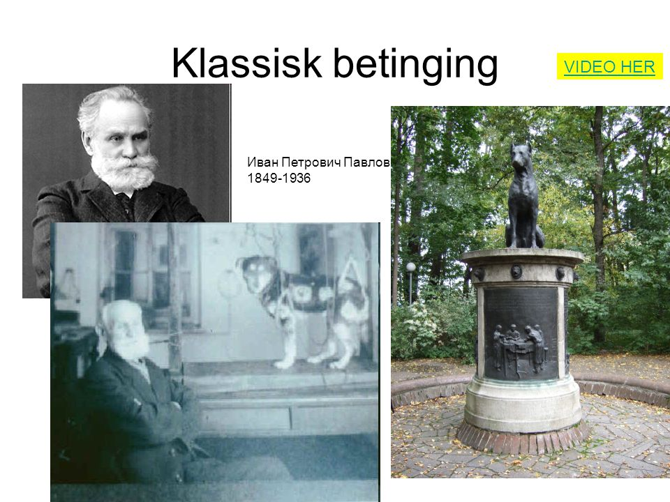Klassisk betinging Иван Петрович Павлов 1849-1936 VIDEO HER