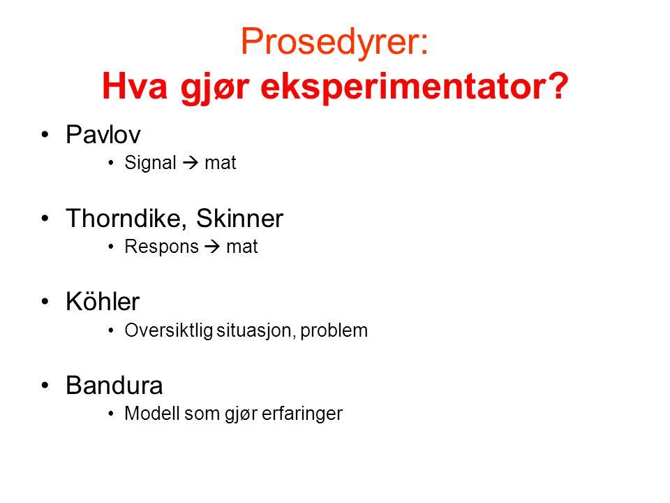 Prosess: Hva gjør forsøksdyr/-person.