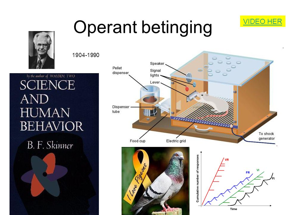 Operant betinging 1904-1990 VIDEO HER