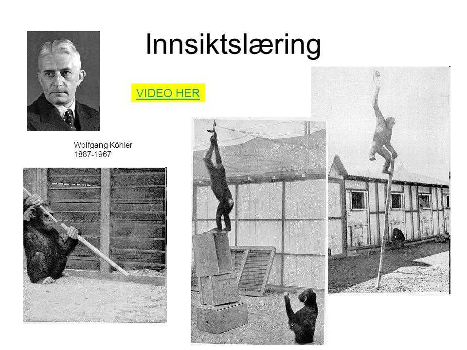 Innsiktslæring Wolfgang Köhler 1887-1967 VIDEO HER