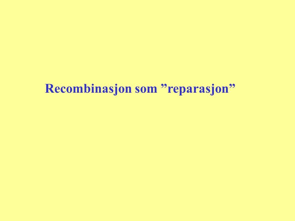 """Recombinasjon som """"reparasjon"""""""