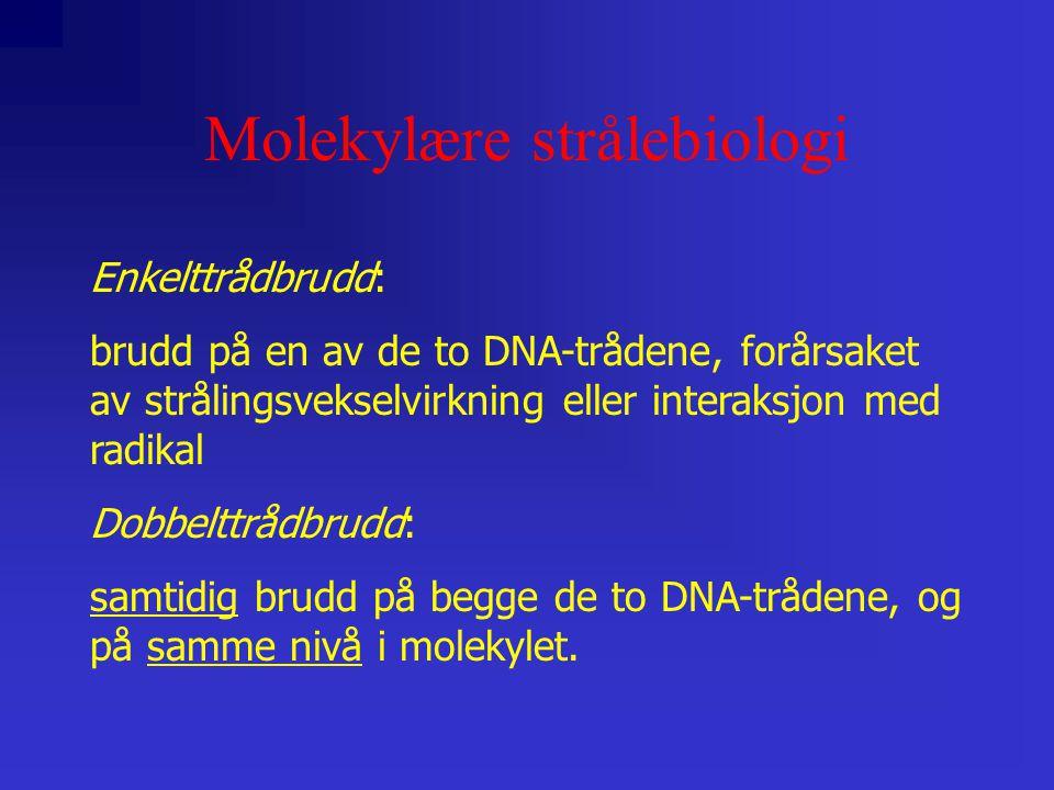 Molekylære strålebiologi Enkelttrådbrudd: brudd på en av de to DNA-trådene, forårsaket av strålingsvekselvirkning eller interaksjon med radikal Dobbelttrådbrudd: samtidig brudd på begge de to DNA-trådene, og på samme nivå i molekylet.