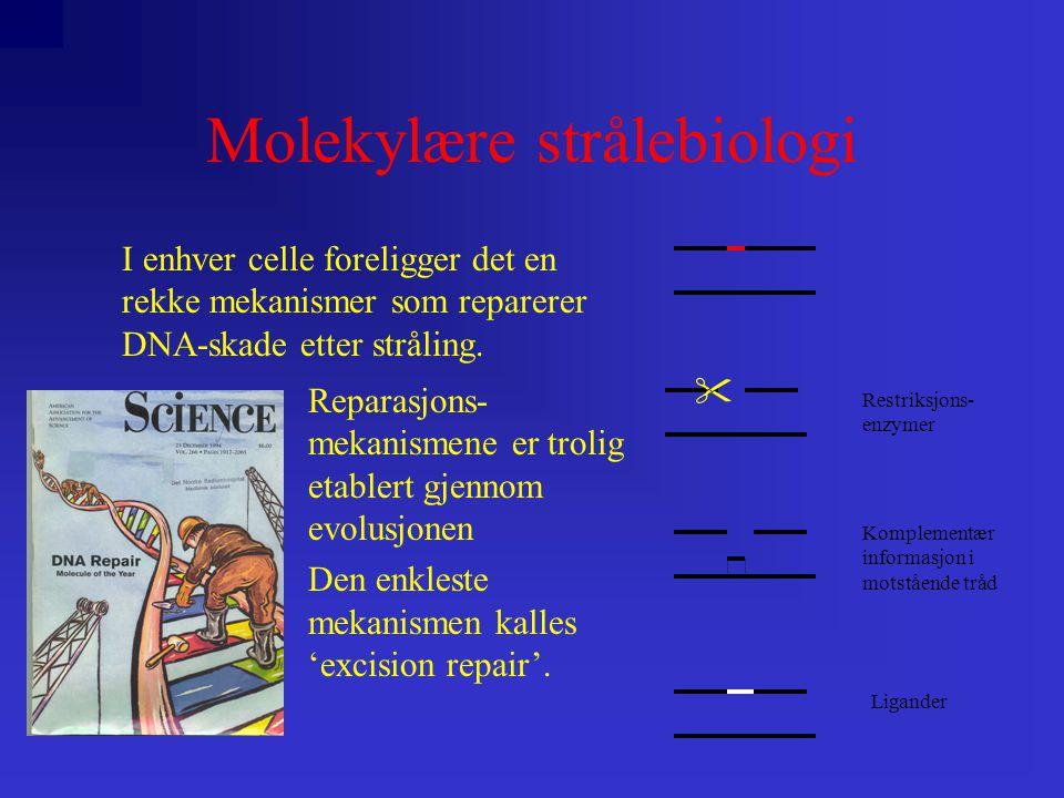 Molekylære strålebiologi I enhver celle foreligger det en rekke mekanismer som reparerer DNA-skade etter stråling.