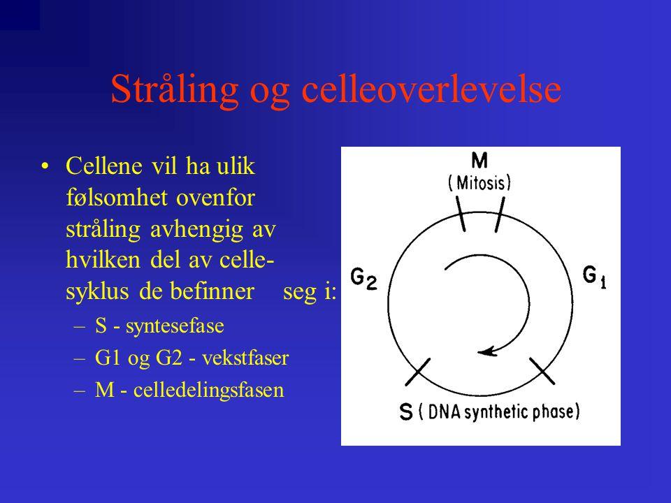 Stråling og celleoverlevelse •Cellene vil ha ulik følsomhet ovenfor stråling avhengig av hvilken del av celle- syklus de befinner seg i: –S - syntesefase –G1 og G2 - vekstfaser –M - celledelingsfasen
