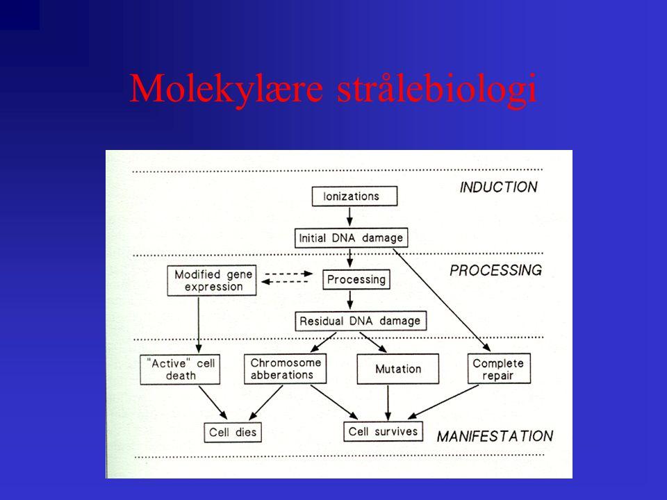 Molekylære strålebiologi