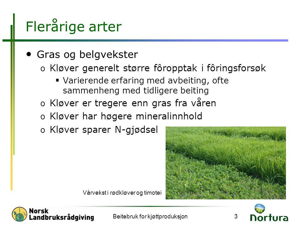 Flerårige arter • Gras og belgvekster o Kløver generelt større fôropptak i fôringsforsøk  Varierende erfaring med avbeiting, ofte sammenheng med tidl