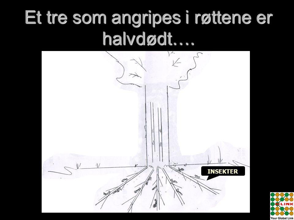Et tre som angripes i røttene er halvdødt…. INSEKTER