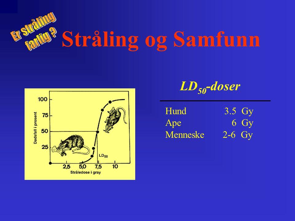 Stråling og Samfunn LD 50 -doser Hund 3.5 Gy Ape 6 Gy Menneske 2-6 Gy