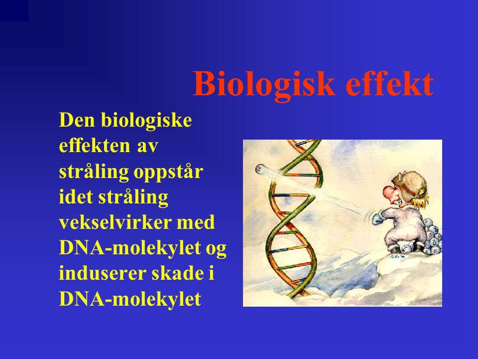 Biologisk effekt Den biologiske effekten av stråling oppstår idet stråling vekselvirker med DNA-molekylet og induserer skade i DNA-molekylet