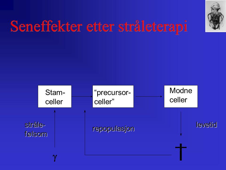 Seneffekter etter stråleterapi Stam-celler Modneceller precursor-celler levetid repopulasjon stråle-følsom 
