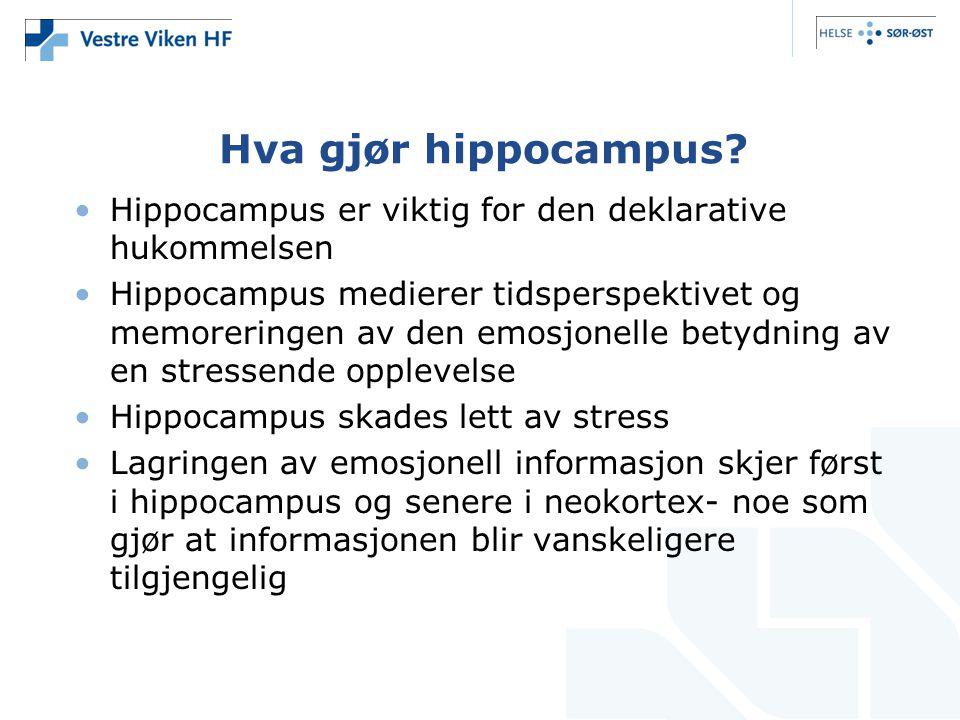 Hva gjør hippocampus.