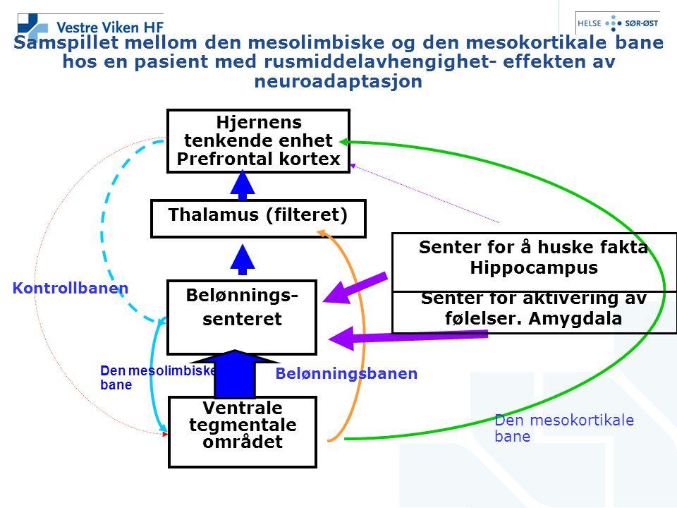 Samspillet mellom den mesolimbiske og den mesokortikale bane hos en pasient med rusmiddelavhengighet- effekten av neuroadaptasjon Hjernens tenkende enhet Prefrontal kortex Thalamus (filteret) Belønnings- senteret Ventrale tegmentale området Den mesokortikale bane Den mesolimbiske bane Kontrollbanen Senter for å huske fakta Hippocampus Senter for aktivering av følelser.