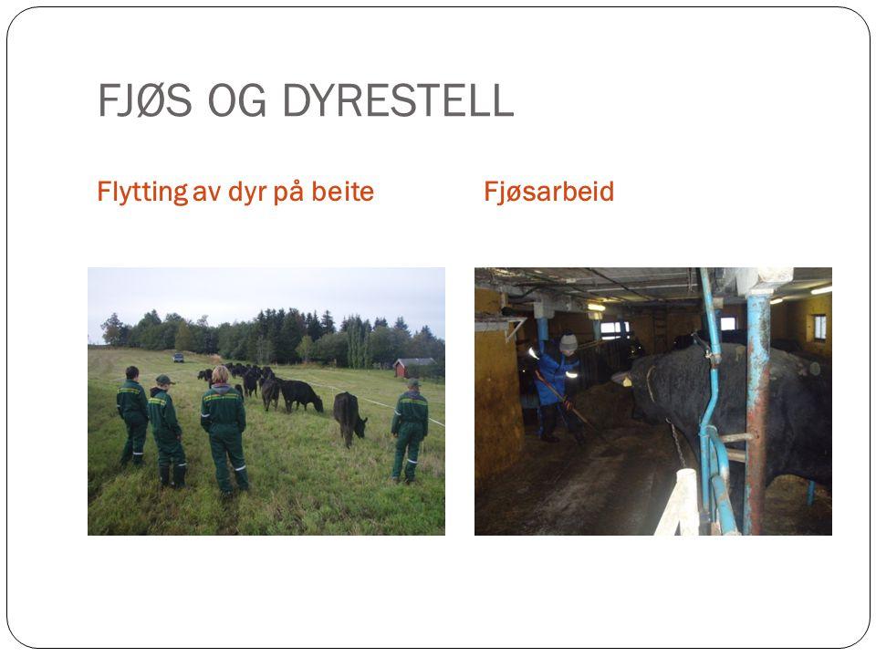 FJØS OG DYRESTELL Flytting av dyr på beiteFjøsarbeid