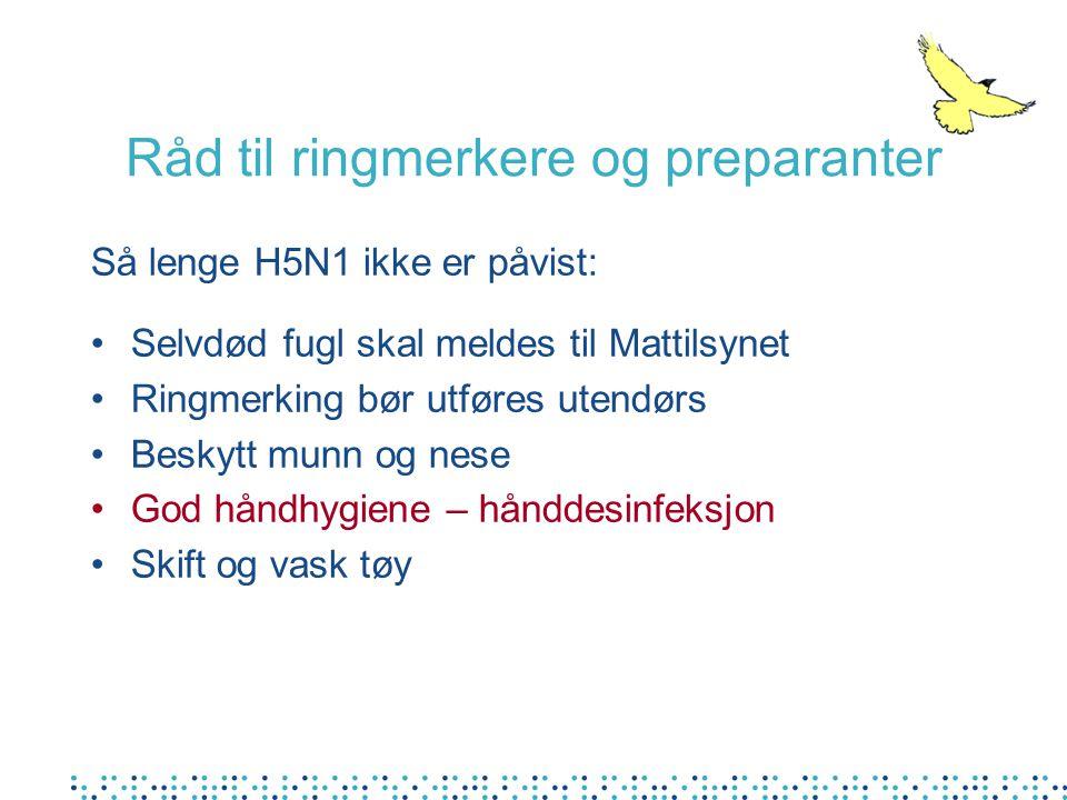 Råd til ringmerkere og preparanter Så lenge H5N1 ikke er påvist: •Selvdød fugl skal meldes til Mattilsynet •Ringmerking bør utføres utendørs •Beskytt munn og nese •God håndhygiene – hånddesinfeksjon •Skift og vask tøy