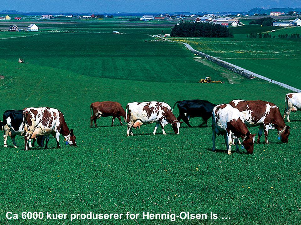 Hennig- Olsen Is Ca 6000 kuer produserer for Hennig-Olsen Is …