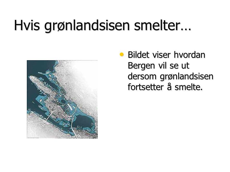 Hvis grønlandsisen smelter… • Bildet viser hvordan Bergen vil se ut dersom grønlandsisen fortsetter å smelte.