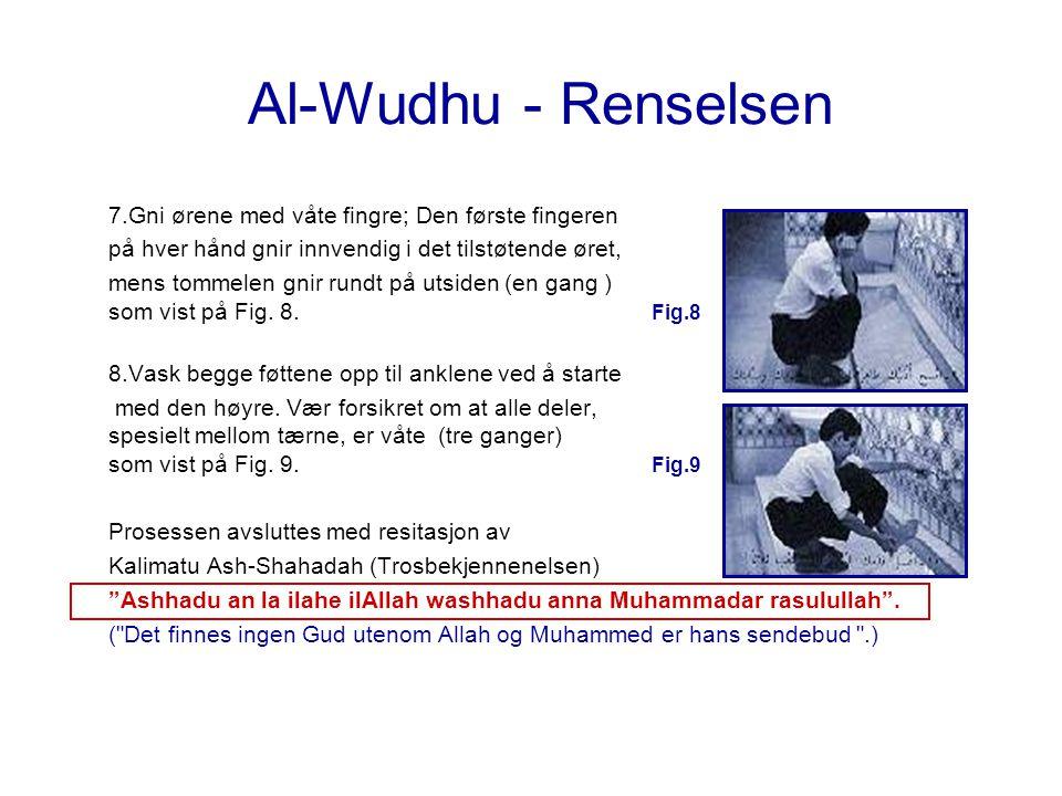 Al-Wudhu - Renselsen 7.Gni ørene med våte fingre; Den første fingeren på hver hånd gnir innvendig i det tilstøtende øret, mens tommelen gnir rundt på
