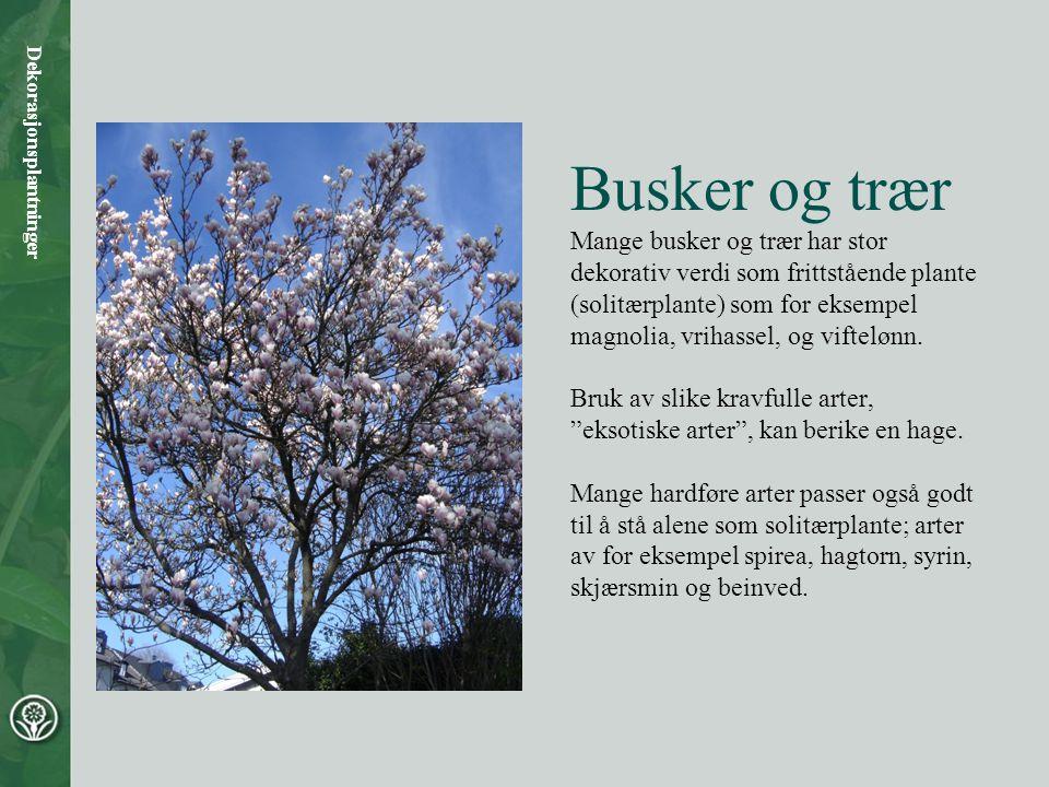 Busker og trær Mange busker og trær har stor dekorativ verdi som frittstående plante (solitærplante) som for eksempel magnolia, vrihassel, og viftelønn.