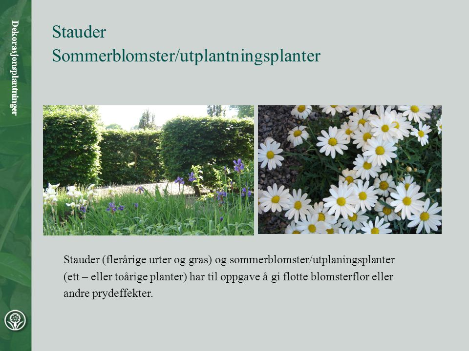 Stauder Sommerblomster/utplantningsplanter Dekorasjonsplantninger Stauder (flerårige urter og gras) og sommerblomster/utplaningsplanter (ett – eller toårige planter) har til oppgave å gi flotte blomsterflor eller andre prydeffekter.