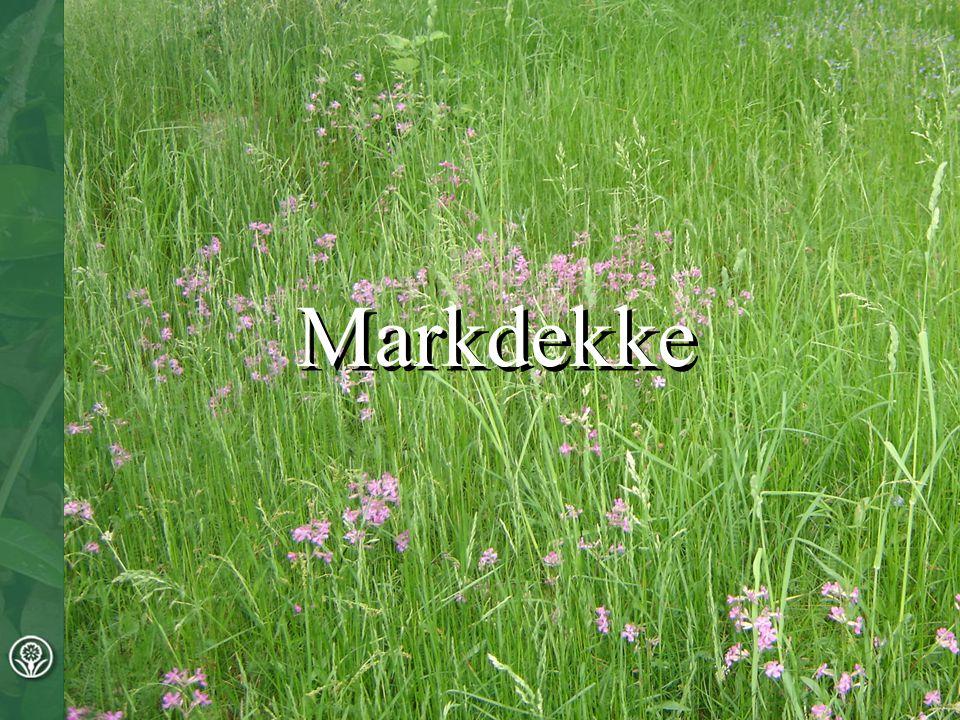 Markdekke